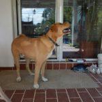 Bruno (13)