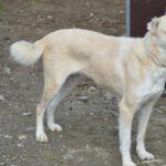 Lilou (5)