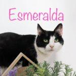 Esmeralda (9)