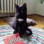 Jella (1)