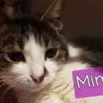 Mimi (1)