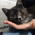 Smokey (1)